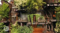 Otros documentales - Construcciones ecológicas: Naturaleza urbana