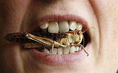 Órbita Laika - Curiosidades científicas - Comer insectos sin querer