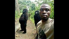El drama que existe detrás del selfi de los gorilas