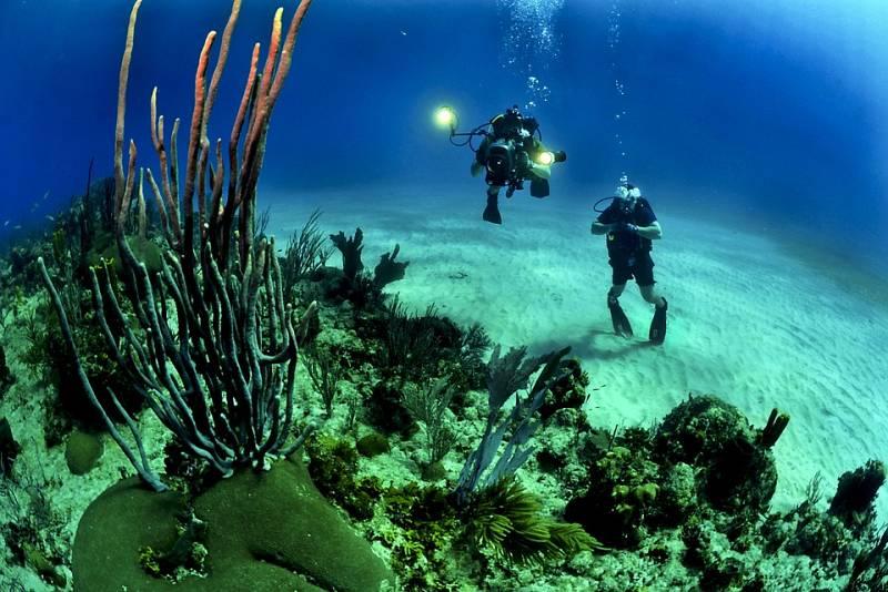 Órbita Laika - Curiosidades científicas - La edad de los corales