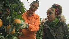 Aquí la tierra - Las naranjas más dulces de Carmona