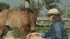Aquí la tierra - El encantador de caballos en Málaga