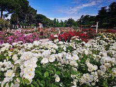 España Directo - En el paraíso de las rosa
