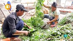 En primer plano, Agricultura familiar