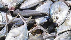 Pescados: Que no te den gato por liebre