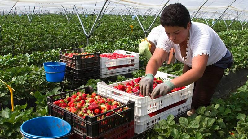 Las mujeres lideran el empleo en Huelva por la campaña de recogida de la fresa