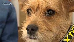 En un mundo de perros: Guarderías caninas