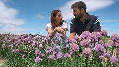 Aquí la tierra - Curiosas flores comestibles