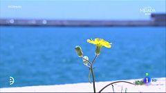 España Directo - Visita al Puerto de Alicante