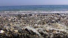Las playas de Málaga y Granada se llenan de salpas, unos seres invertebrados que parecen trozos de plástico