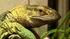 Repor - Reptilianos - Avance