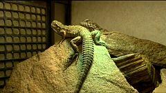 Repor - Reptilianos