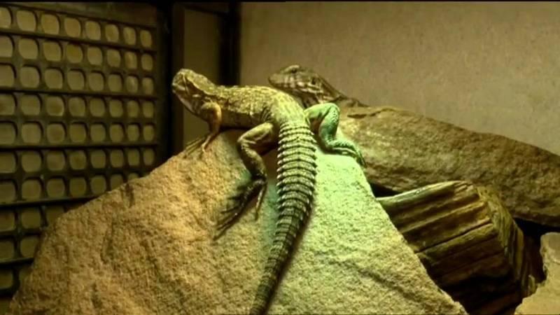 Repor - Reptilianos - ver ahora