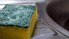 En los estropajos de cocina habitan virus que matan a bacterias resistentes a los antibióticos