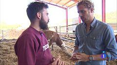 Comando Actualidad - Pueblos vivos - Leasing de vacas