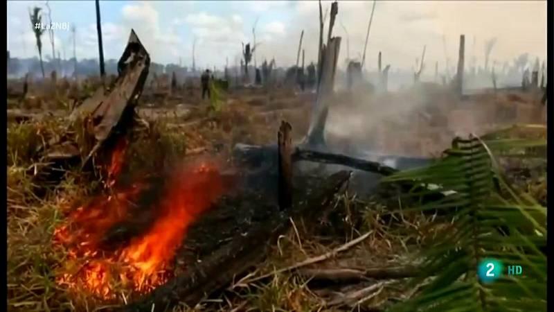 Deforestación alarmante en la Amazonía