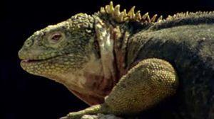 Los animales sin miedo de Galápagos