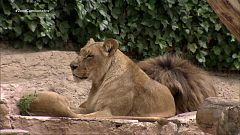 Informe Semanal - Zoos en la encrucijada