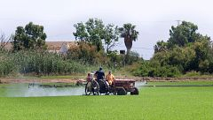 La Fiscalía investiga el descenso de los niveles de agua en la Albufera