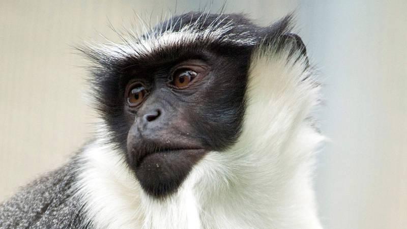 La Lista Roja de especies amenazadas cifra en más de 28.000 los animales, plantas y hongos en peligro de extinción
