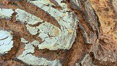 """Aquí la tierra - Un pan """"miga de oro"""""""