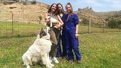 Aquí la tierra - Irene y Gala, esperanza para la raza xisqueta
