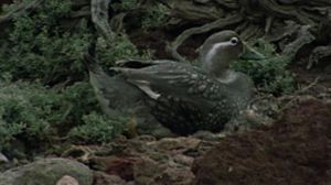 Los cormoranes de la Patagonia