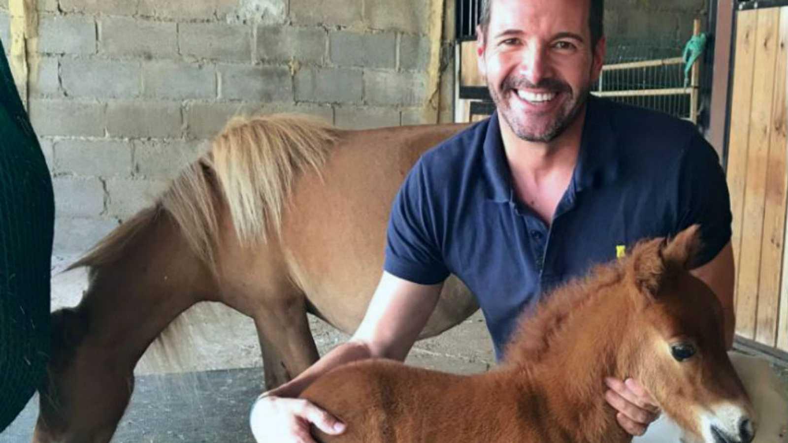 Adorables caballos miniatura