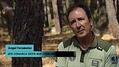 "Ángel Fernández: ""Tenemos muchos bosques enfermos"""
