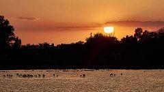 Doñana cumple 50 años con su futuro aún amenazado