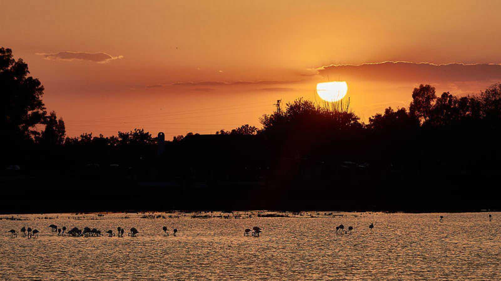 El Parque Nacional de Doñana cumple este miércoles 50 años, los que han transcurrido desde que, el 14 de agosto de 1969, el Consejo de Ministros acordara la declaración de este emblemático espacio, cuya conservación es de especial interés dada la bio