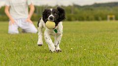 La mañana - Un mundo de perros: pros y contras del juego con pelota