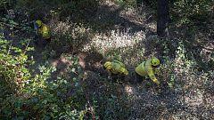 El incendio de Gran Canaria, a punto de quedar estabilizado