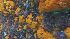 España Directo - Un reino coral escondido en Almuñécar