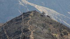 El incendio de Gran Canaria ha afectado a su biodiversidad