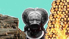 Paremos la deforestación del Amazonas