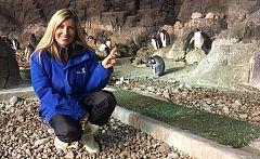 Aquí la tierra - ¿Qué hay más adorable que las crías del pingüino?