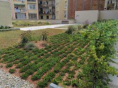 España Directo - Cubiertas verdes de Barcelona