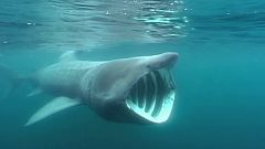 Grandes documentales - Skagerrak salvaje