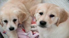 A partir de hoy - ¿Deben pagar los perros una tasa de limpieza además de los impuestos?