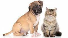 Para Todos La 2-Iniciativas para adoptar poerros y gatos