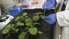 Lab24 - Biotecnología agroforestal y el Pamplonetario