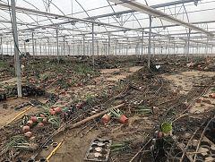 España Directo -  Las pérdidas en los invernaderos de Almería