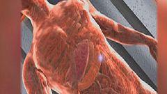 La Universidad de Zaragoza presenta un proyecto europeo para cartografiar el interior del cuerpo humano