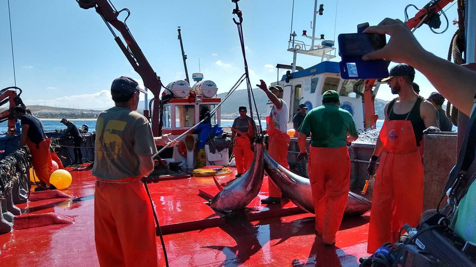 Crónicas - Almadraba, el laberinto de los atunes - ver ahora