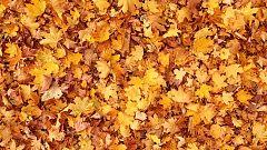 La mañana - Llega el otoño con temperaturas más altas
