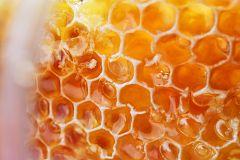 España Directo - Corte de la miel en Ayora