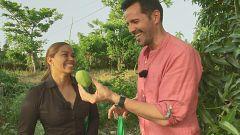 Aquí la tierra - María Marte y el mango, ingrediente de temporada