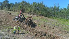 Aquí la tierra - ¿Qué es la biomasa?
