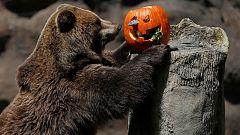 Los animales celebran Halloween